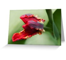 Awaken -Tulip Greeting Card