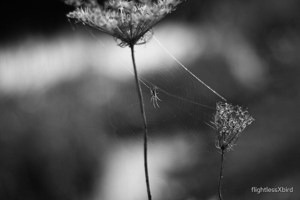 web. by flightlessXbird