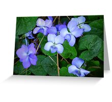 """Pine Needles And Wild Violets"" Greeting Card"
