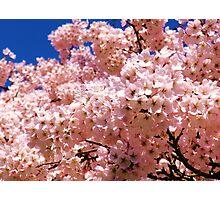 Blossom Tree Close-Up,  Photographic Print