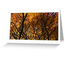 Colours of Fall, Warburton Greeting Card