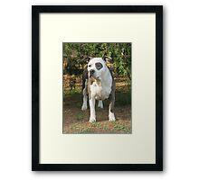 Silver Sparkle Framed Print