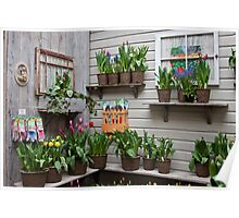 Tulips for Sale Poster