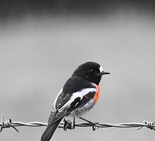 Bird on a Wire by SnapAddict