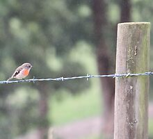 Bird on a Wire 2 by SnapAddict