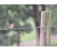 Bird on a Wire 2 Photographic Print
