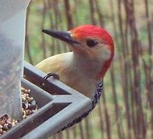 Rudy Red-Bellied Woodpecker by WalnutHill