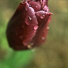 A Spring Shower by RockyWalley