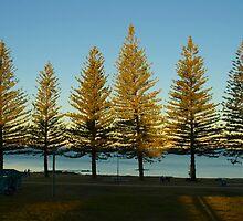 Pine trees by Lee Lee