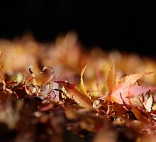 Low Leaf by photodork