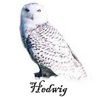 Hedwig Harry Potter Photographic Print