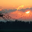 Sunrise with the Birds by Susan Blevins