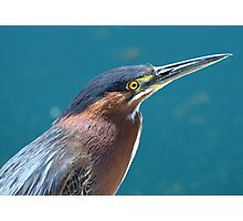 Portrait of a Heron Photographic Print