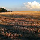 Sun on the stubble 2 by David Rozario