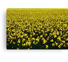 Daffodil Field Forever Canvas Print