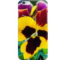 Backlit pansies on a summer day macro iPhone Case/Skin
