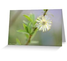 Blown pussywillow Salix Greeting Card
