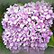 Avatar/Hydrangea - Enchanted Flowers*