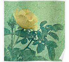 Yellow Rose Vintage Style Photo Poster