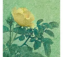 Yellow Rose Vintage Style Photo Photographic Print