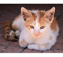 Ginger and white cat 2 Photographic Print