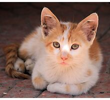 Ginger and white cat 3 Photographic Print