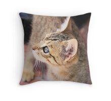 Tabby kitten 4 Throw Pillow