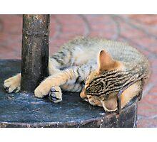 Tabby kitten 12 Photographic Print