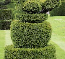 Robin topiary by rhallam