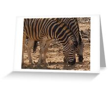 Zebra - chatting over lunch - Colchester Zoo Greeting Card