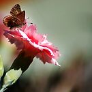 Brown Butterfly & Carnation by Eve Parry