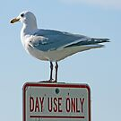 Day Use Only by RichImage
