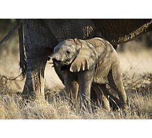 Samburu Elephant Photographic Print