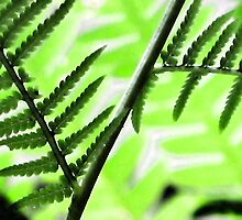 Sweet Fern -Colors and Patterns -- Bridgton,  Maine by T.J. Martin