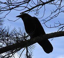 Little Raven Silhouette by Jenny Brice