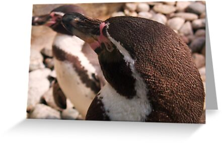 Penguins at Colchester Zoo by MichelleRees
