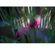Blurred Chives with Mandevilla flower in background  Photographic Print