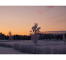 Winterfrost Photographic Print
