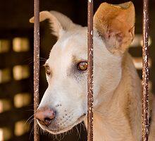 Forlorn Puppy by Nila Newsom