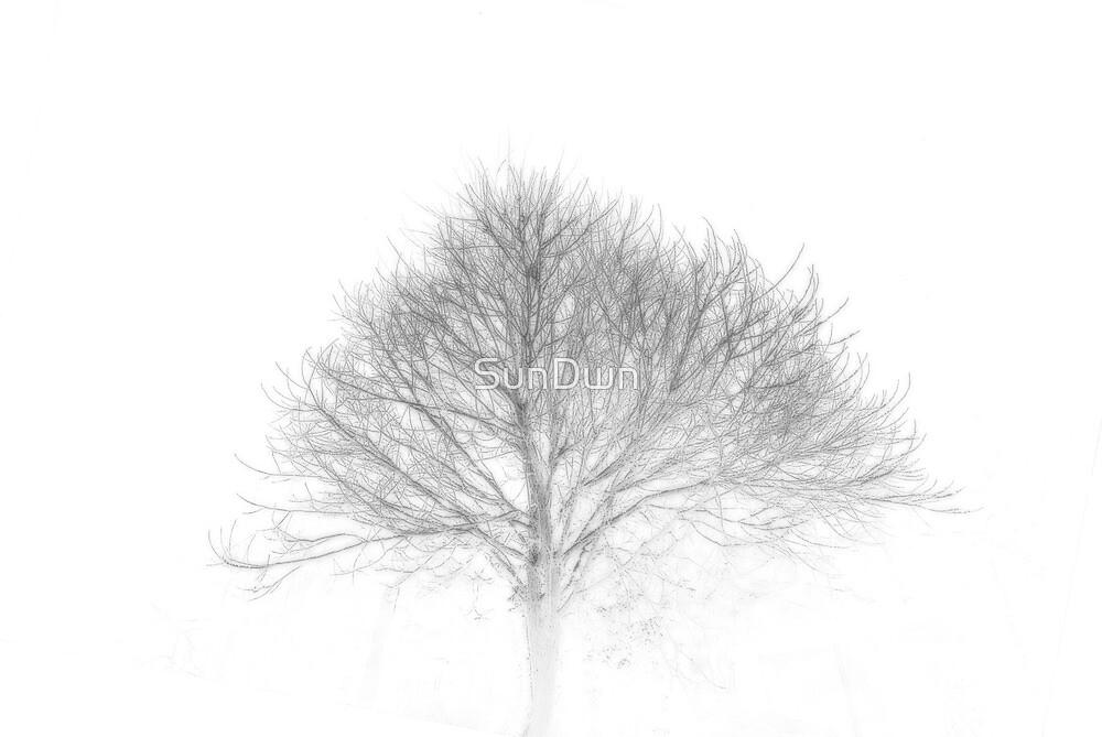 Tree Skeleton by SunDwn