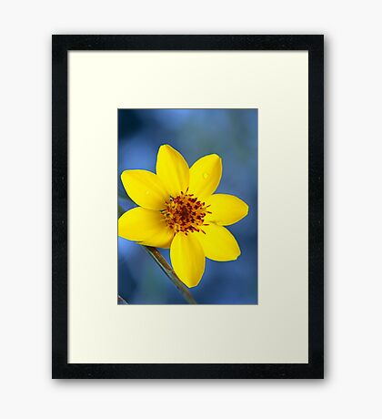 ©NS The Yellow Drop IA. Framed Print