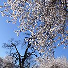 Springtime by Jann Ashworth
