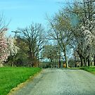 Spring on My Country Road by Ruth Lambert