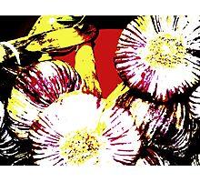Onions Veggies 4 Photographic Print