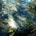Rayon vert by rdalpes