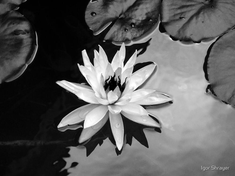 Available - Black and White Interpretation by Igor Shrayer