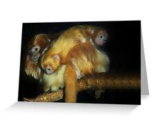 Golden Lion Tamarin twin babies Greeting Card