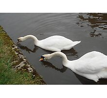 What A Lovely Pair! Photographic Print