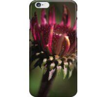 Echinacea Daybreak iPhone Case/Skin
