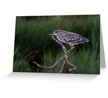 Heron Hunt Greeting Card